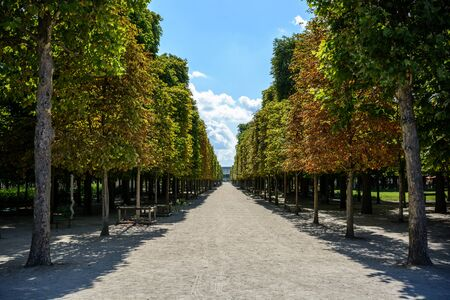 A sunny alley bordered with chestnut trees in the Tuileries garden in Paris at the end of summer. Stock Photo