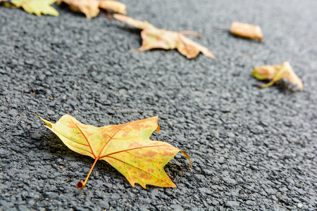 Close-up view with shallow depth of field of dead mapple leaves lying on an asphalted road. Stock Photo