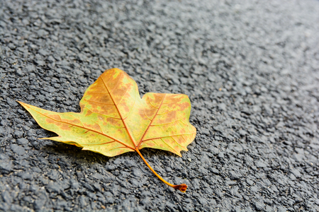 Close-up view with shallow depth of field of a dead mapple leaf lying on an asphalted road.