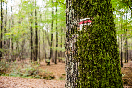 Red and white direction sign painted on a moss covered oak tree trunk on a long distance hiking trail in a french forest in autumn.