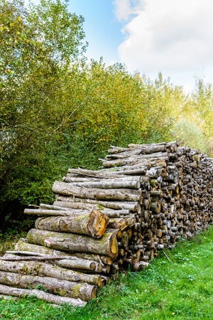 A cut wood pile along a logging road in a french forest. Stock Photo