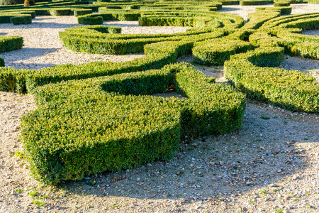 Trimmed Boxwood In A French Formal Garden. Stock Photo, Picture And ...