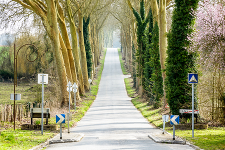 The small sloping country road leaving the village of Rozay-en-Brie to the south, bordered by two rows of majestic plane trees, is a true invitation to take a road trip around the french countryside.