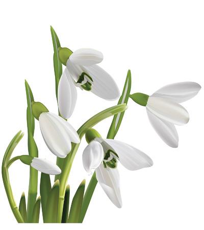 Lente sneeuwklokje bloemen boeket geïsoleerd op wit Vector illustratie