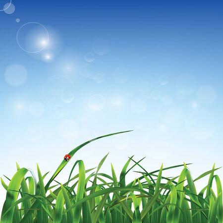 sedge: Grass and ladybug. Vector ilustration