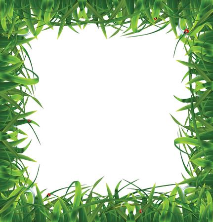 sedge: Frame of grass  Vector illustration