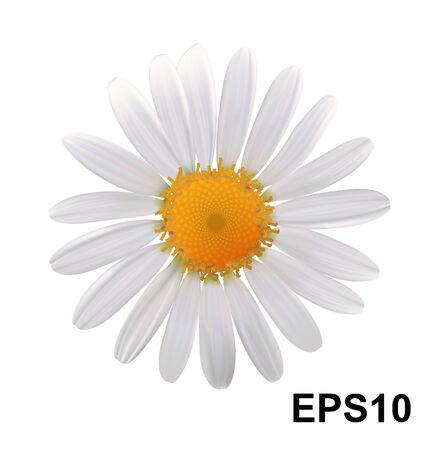 Ilustración vectorial Flor de la margarita Ilustración de vector