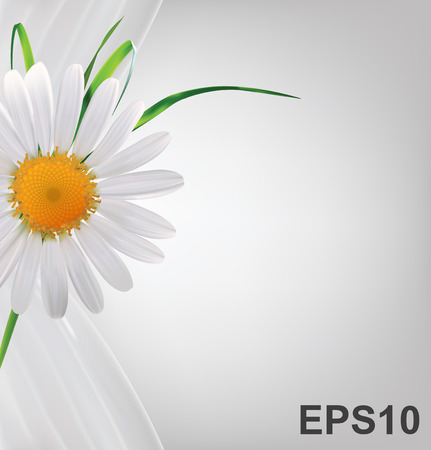 daisy vector: Grey abstract background with daisy and grass  Vector illustration
