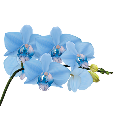 Blue orchid branch with buds. Vector illustrator