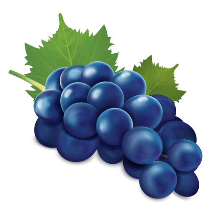 Blue grapes bunch. Vector illustration
