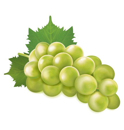 Green grapes bunch. Vector illustration.