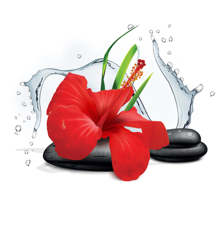 pistil: Hibiscus flower, water splash and zen stone. Vector illustration Illustration