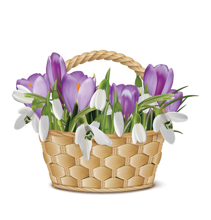 Bouquet of snowdrops in a basket. Vector illustration