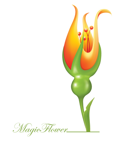 Magic Flower. Vector illustration Ilustrace