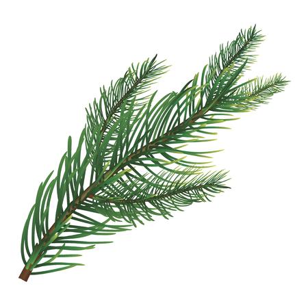 Branch of pine. Vector illustration Ilustrace