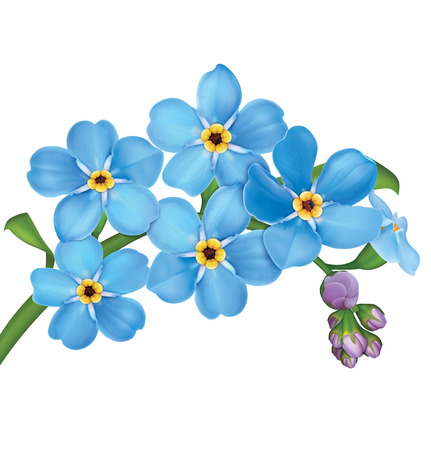 Bunch of blue forget me not flowers with leaves isolated on white background. Vector illustration Ilustracja
