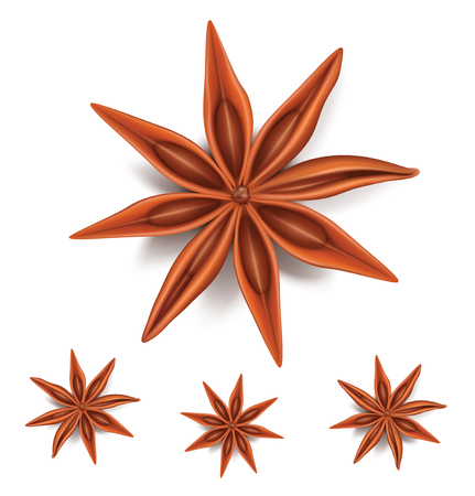 Natural badiyan stars or anise stars condiments with seeds. Vector illustration Ilustracja