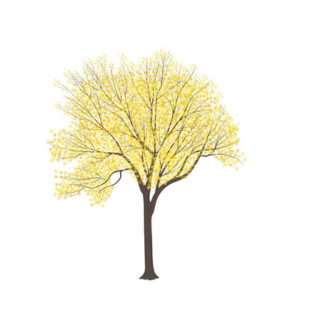 Ash-tree with yellow leaves on a white background Vectores
