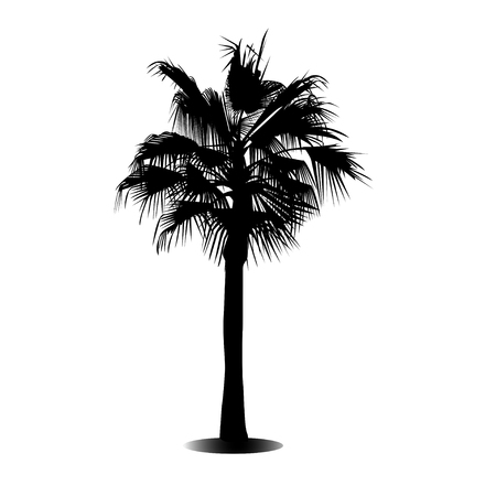 blackandwhite: Black and white silhouette of a palm tree