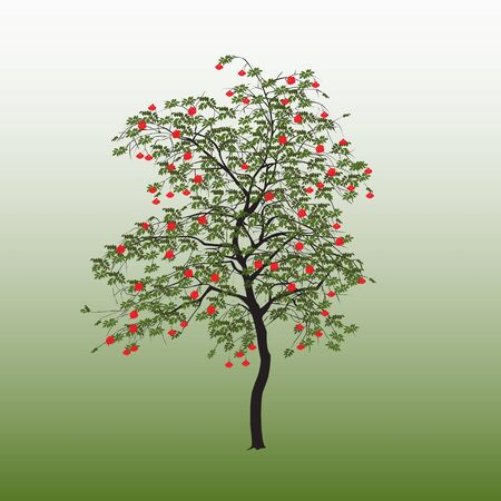 Mountain ash with green leaves and red berries on a gradient background