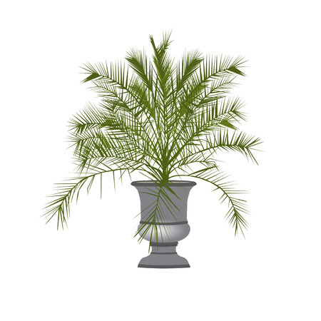 A Date Palm Tree In A Vase On A White Background Royalty Free