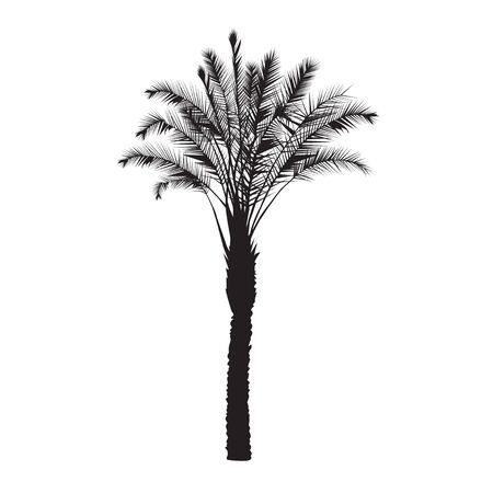 date palm: A silhouette of a date palm tree on a white background