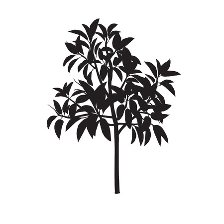 Ficus silhouette on a white monophonic background Ilustrace