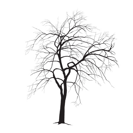 fallen: An tree silhouette in the winter with fallen down listm