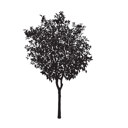 The isolated silhouette of an orange tree on a white color