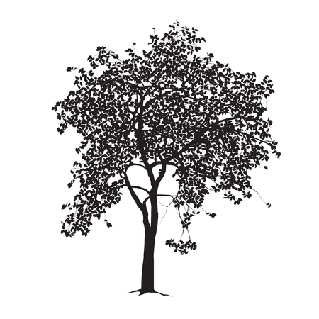 blackandwhite: Tree silhouette with leaves on a white background