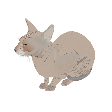Adult nonhairy cat of breed Don sphinx (Sphinx)