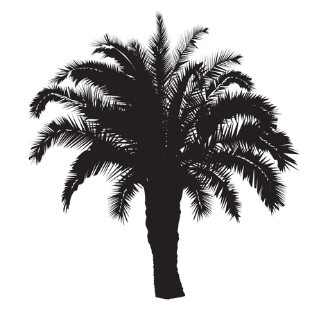 Silhouette of a big date palm tree on a white background Illustration