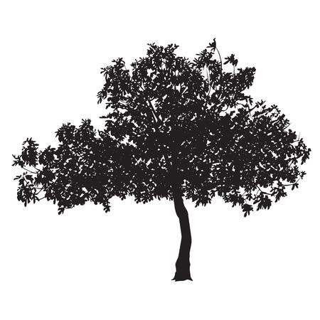 무화과 나무 (Ficus carica) 흰색 배경에 시트와 실루엣