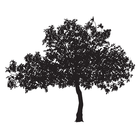 Fig tree (Ficus carica) silhouette with sheet on a white background