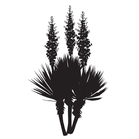 Silhouette of a large plant of a yucca (Yucca filamentosa) with flowers