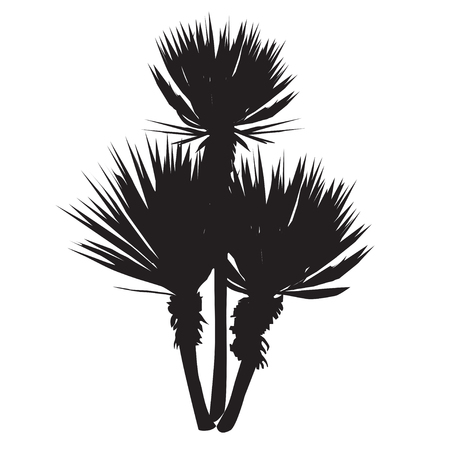 Silhouette of a large plant of a yucca (Yucca filamentosa) with three stalks Illustration