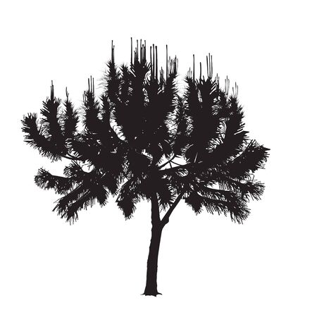 Silhouette of the Mediterranean pine with young escapes in the vector image on a white background