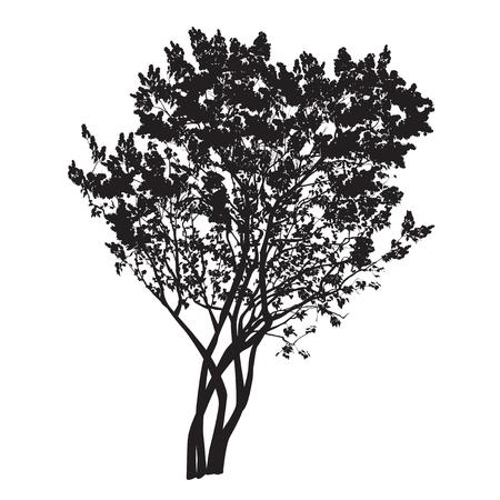 흰색 배경에 벡터 이미지에서 봄에 꽃이 만발한 라일락의 부시 대통령의 실루엣 스톡 콘텐츠 - 79327366