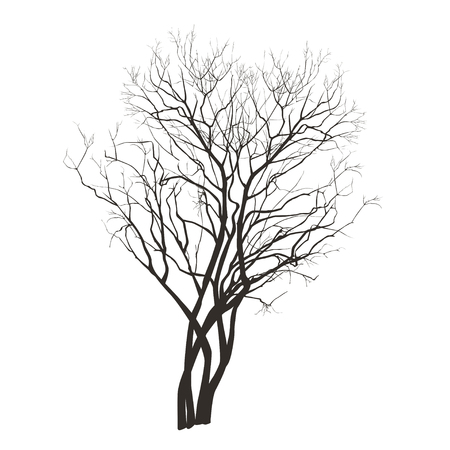 Lilac bush silhouette without foliage in the winter in the vector image on a white background