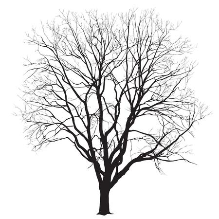 Silhouet van een grote boom zonder bladeren op een witte achtergrond, de vector afbeelding Stock Illustratie
