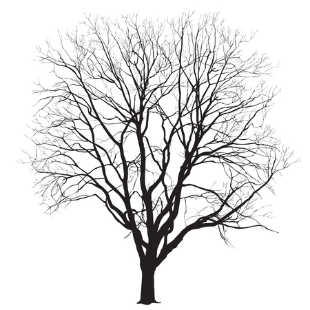 Silhouette of a big tree without leaves on a white background, the vector image