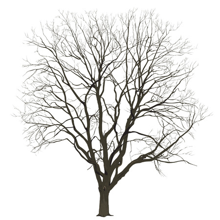 Big tree without leaves on a white background in color, the vector image Иллюстрация