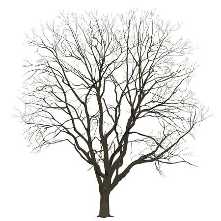 Grote boom zonder bladeren op een witte achtergrond in kleur, het vectorbeeld