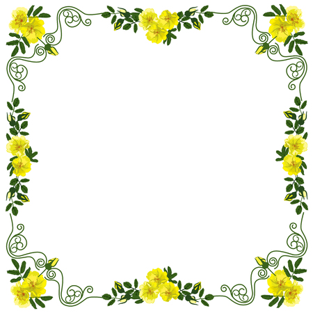 Decorative frame, frame for the text of square shape, with vignettes in the form of leaves and yellow colors of a dogrose, the color vector image Illusztráció