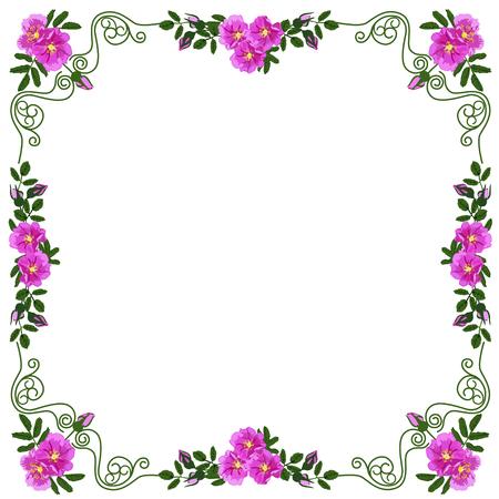 Decoratief kader, kader voor de tekst van vierkante vorm, met vignetten in de vorm van bladeren en rode kleuren van een dogrose, het kleuren vectorbeeld