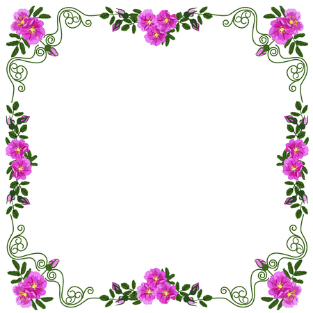 Decorative frame, frame for the text of square shape, with vignettes in the form of leaves and red colors of a dogrose, the color vector image