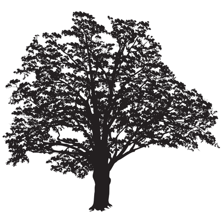 Silhouette of a tree of an oak (Quercus) with leaves, the black-and-white vector image