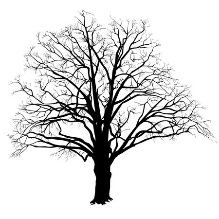 Silhouette d'un arbre de chêne (Quercus) avec des feuilles, l'image vectorielle en noir et blanc