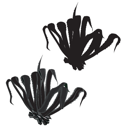 白の背景にベクトル グレースケール画像、ベクトル シルエット アメリカ agave (アガベ アメリカーナ)  イラスト・ベクター素材
