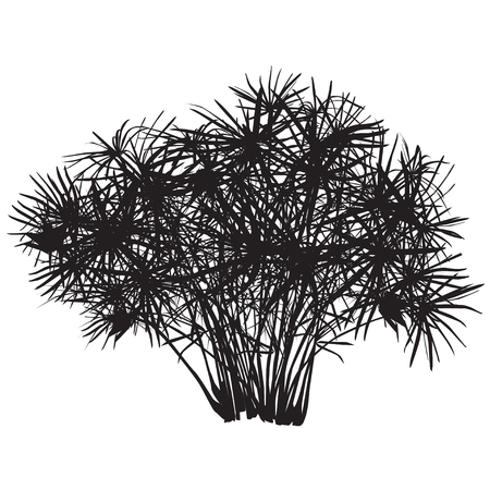 Papyrus bush silhouette illustration. Ilustração